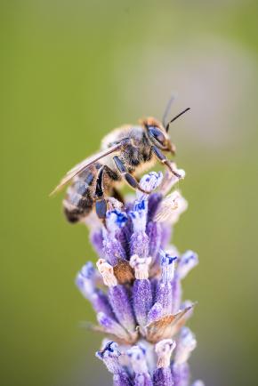 Lebah dan Tumbuhan